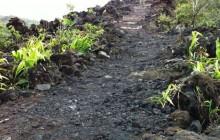 Arenal Volcano Tour