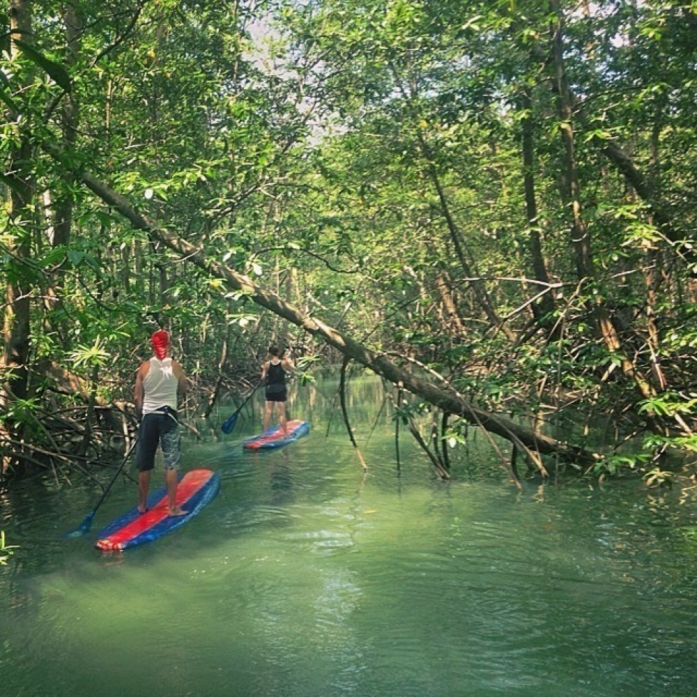 Paddle Board the Mangroves