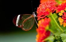 Butterfly & Fauna Garden at Danaus Eco-Center