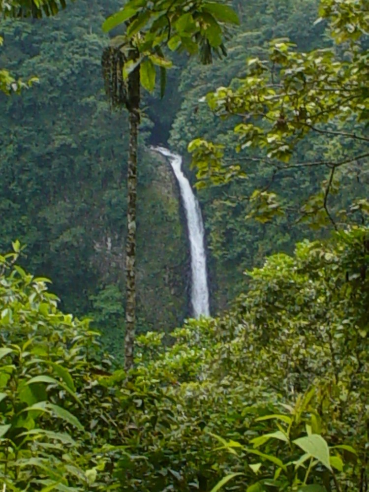 Chato Hill Rainforest & La Fortuna Waterfall Hike