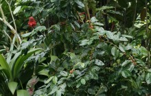 Children's Rain Forest Tour