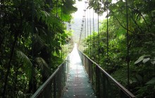 Monteverde One Day Tour (Hanging Bridges)
