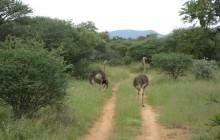 Mokolodi Nature Reserve.