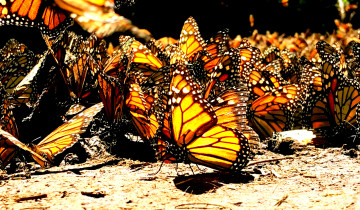A picture of 7-Day Monarch Butterfly Tour