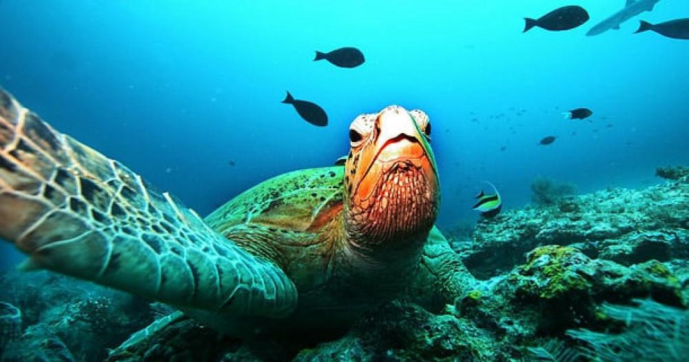 Marine Turtle Snorkel Tour
