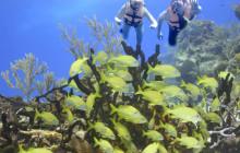 Private Snorkel Tour in Cancun, Reef & Cenote