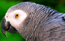 Mexico Bird Watching Tour - 11 Day Experience