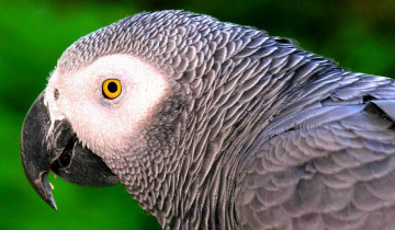 A picture of Mexico Bird Watching Tour - 11 Day Experience