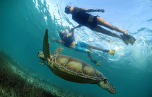 Tulum Turtle Swim and Snorkel Tour from Cancun