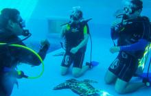 Open Water Diving Certification