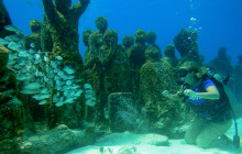 Underwater Museum Dive and Reef Dive (2 Tanks Total)