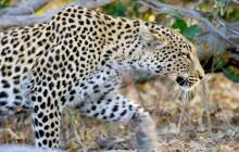 Desert Special! Nxai, Makgadikgadi Pans and Kalahari Safari