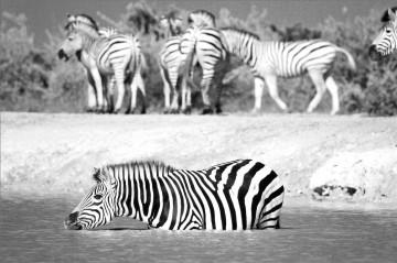 A picture of Classic Safari Itinerary