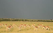 Ulinda Safari Trails