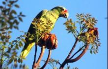 Birding Package Central Belize and Caye Caulker (7 days)
