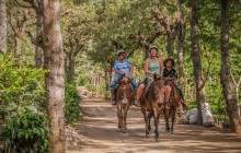 Plantation Mule Ride - Tour