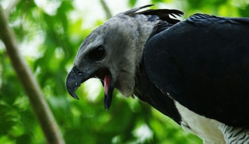A picture of Realm of the Harpy Eagle