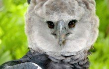 Realm of the Harpy Eagle