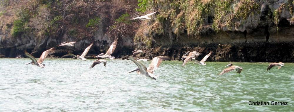 Punta Patino Nature Reserve
