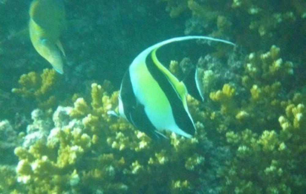 Snorkeling & Historic Portobelo Tour