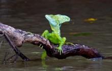 Río Frío Costa Rica