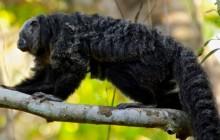 Pacaya-samiria National Reserve
