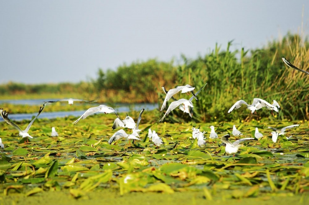 2 Day Tour - The Danube Delta & Black Sea