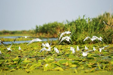 A picture of 2 Day Tour - The Danube Delta & Black Sea