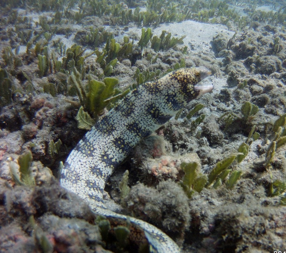 Private ½ Day Snorkeling Tour