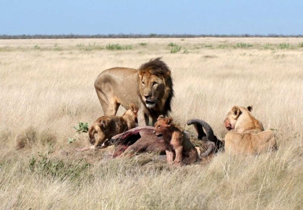 Etosha Explorer – Wildlife Adventure