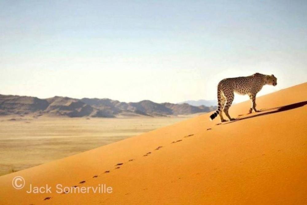 Kalahari & The Namib Desert