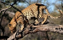 Etosha Wildlife Experience