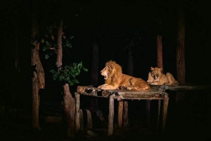 Chiang Mai Night Safari Private
