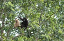 Flight Of The Gibbon With Safari Tour