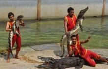 Damnoen Saduak Floating Market, Crocodile Farm, Elephant Show