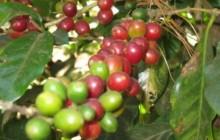 El Salvador Coffee Tour