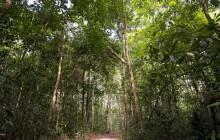 Survival Techniques In the Amazon Jungle