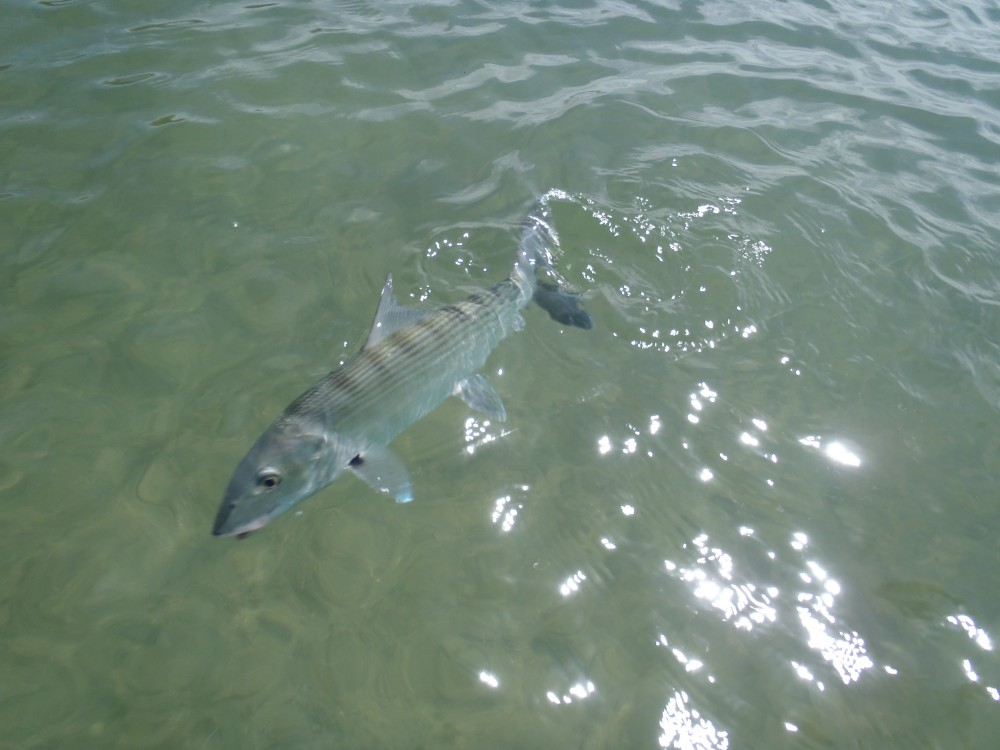 Light Tackle: Spin Fishing (Lagoon) Full Day