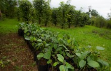 La Tigra Forest Tree Planting & Agro-ecological Farm Visit