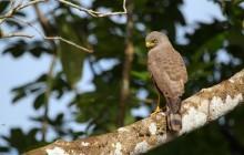 Birdwatching At El Silencio Reserve
