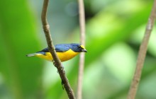 Birdwatching At Arenal Lake and Peninsula trail