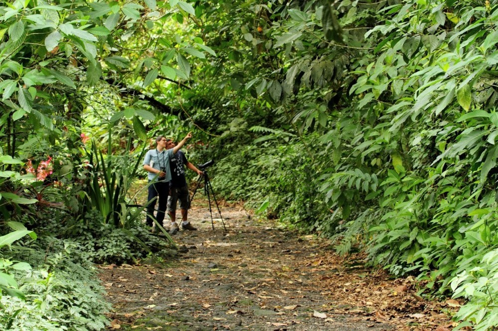 Birdwatching At Caño Negro Wildlife Refuge