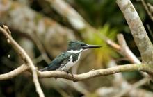 Birdwatching At Rio Celeste