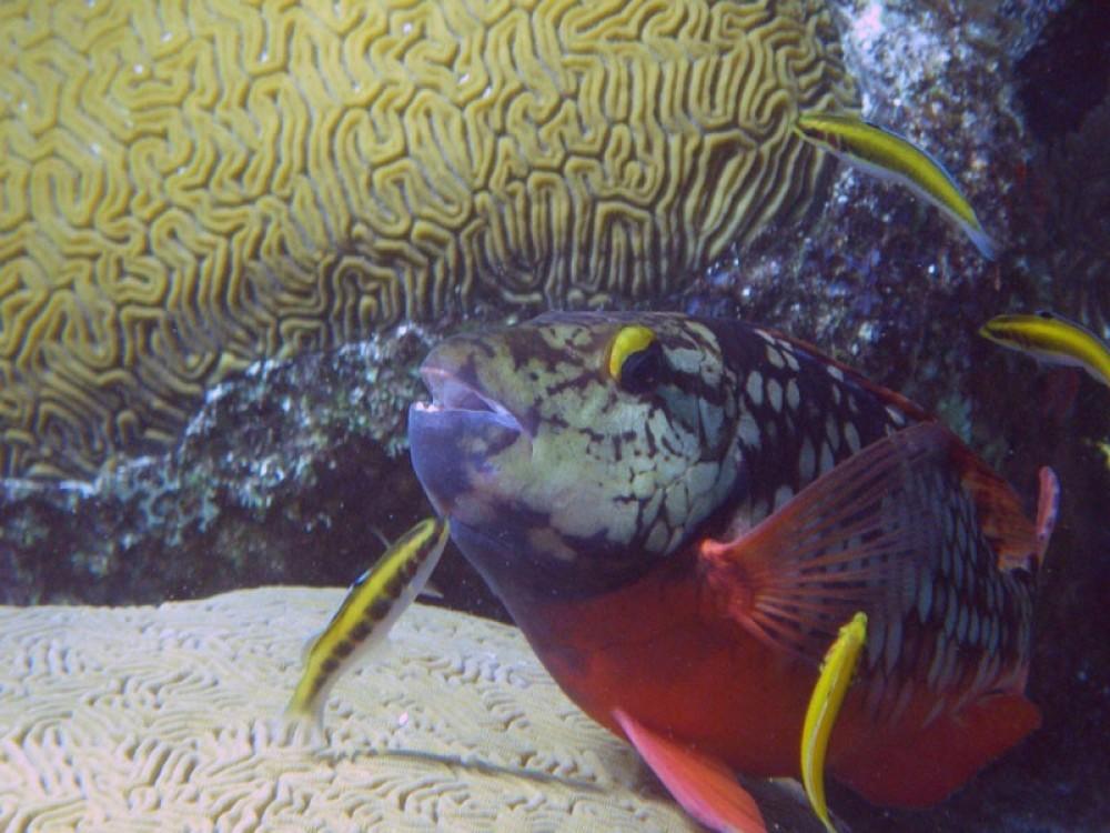 Scuba Diving: 3 Tanks