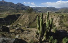 Arequipa And Colca Canyon (02 Days & 01 Night)