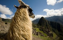 Must-See Cusco