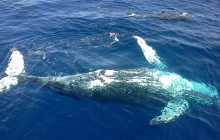 Whale Watching & Cayo Levantado