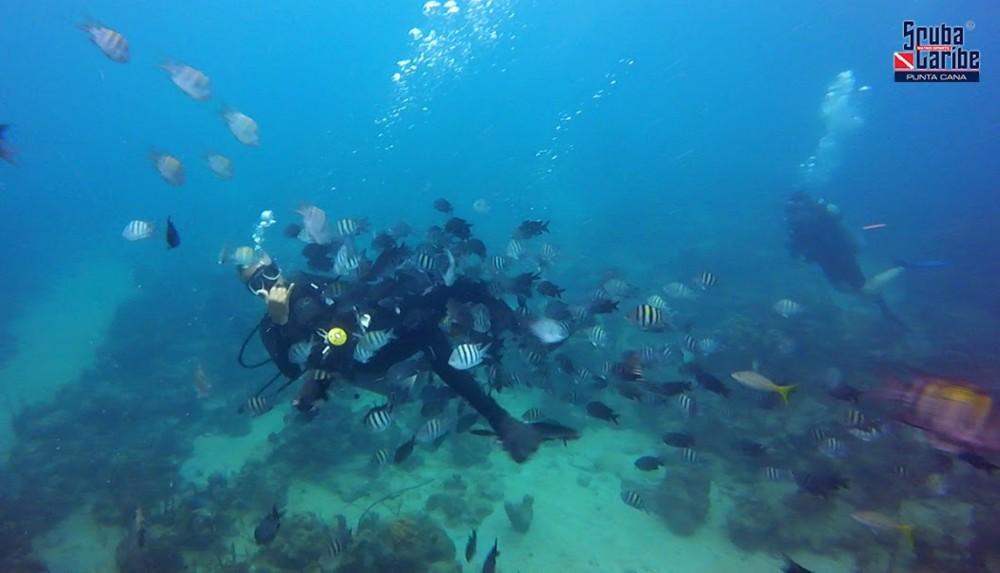 Single dive in Puerto Plata