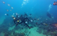 Single dive in Puerto Plata
