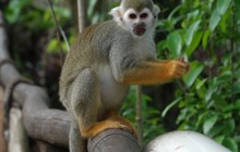 Ziplines Adventures At Monkey Jungle